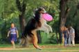青島訓犬基地,青島正規訓犬基地,青島訓犬學校,青島專業訓犬,青島工作犬訓練