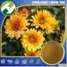 ChrysanthemumExtractPowder