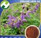 SalviaMiltiorrhizaExtractTanshinoneIia2030%