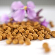貓糧代工貝可恩營養貓糧銷售誠招代理商OEM代工圖片