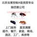 北京上门灭蟑螂公司捕鼠灭四害提供灭蝇灯病媒生物防治除四害专业团队