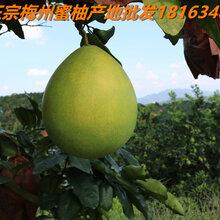 梅州柚子批发图片