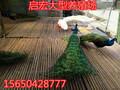 孔雀养殖场在哪里什么地方有卖孔雀的图片