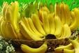水果进口厄瓜多尔香蕉种植业情况广州进口报关清关公司