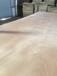 二次成型家具板漂白面整芯底板桃花芯面膠合板多層板