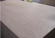 桃花芯面楊木底膠合板