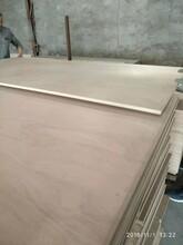 包裝箱多層板楊木膠合板圖片