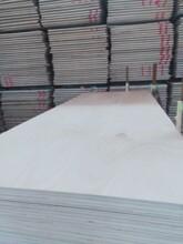 包裝膠合板8厘桃花芯面整板整芯多層板圖片