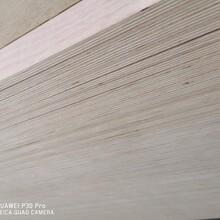三次成型木材板楊木多層板家具板圖片