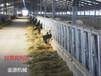 牛頸枷廠家直銷牛頸枷質量保障牛頸枷甘肅賓利達價格優惠