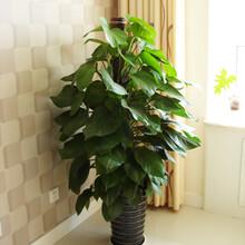 绿植租摆绿植养护绿植方案设计