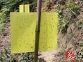 江西黄板粘虫板的作用及特点介绍图片
