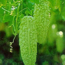 厂家直供苦瓜多糖高品质苦瓜提取物纯天然高品质斯诺特生物