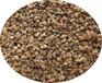芹菜粉芹菜籽提取物厂家热销优质的芹菜提取物