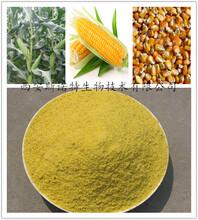 玉米粉玉米营养粉厂家现货直销包邮图片
