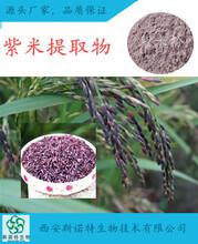 天然紫米提取物紫米粉营养饮品现货包邮图片
