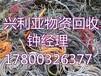 泰安電纜回收泰安廢舊電纜回收價格-今日更新新聞資訊!