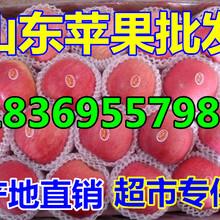 黑龙江牡丹江苹果价格预测图片