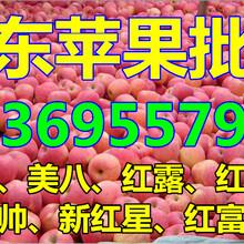 山东苹果批发市场在哪里图片