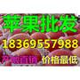 甘肃酒泉水晶红富士苹果多少钱一斤图片
