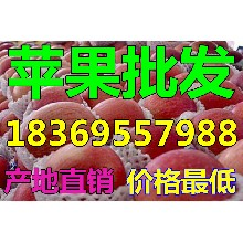 浙江舟山纸夹膜红富士苹果价格是多少钱一斤图片