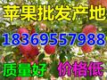 宁夏银川水晶红富士苹果价格行情图片