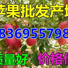安徽阜阳苹果价格行情图片