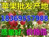 黑龙江齐齐哈尔红嘎啦苹果基地