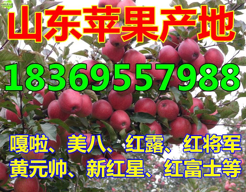 吉林红富士苹果多少钱一斤