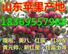 广东清远纸袋水晶富士苹果供应商