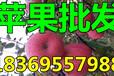 浙江湖州纸夹膜红富士苹果价格
