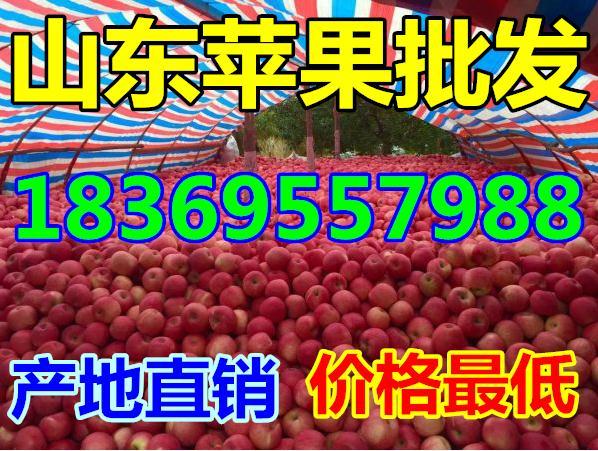 上海纸袋水晶富士苹果价格行情分析