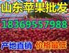 黑龙江齐齐哈尔红嘎啦苹果销售价格