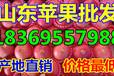 山东省济宁市水晶红富士苹果产地