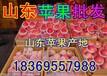 宜州红露苹果批发价格
