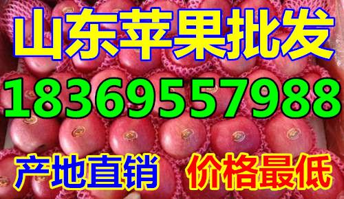 山东威海纸夹膜红富士苹果价格行情预测