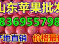 山东临沂苹果价格图片