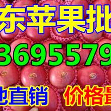 浙江杭州纸夹膜红富士苹果批发商图片