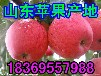 河南郑州苹果价格行情怎样
