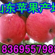 安徽铜陵苹果价格是多少钱一斤图片