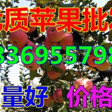 广西桂林红富士苹果批发商图片