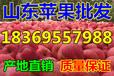 山东菏泽早熟富士苹果哪里便宜