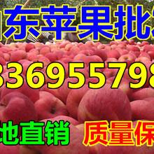 河北水晶红富士苹果供应价格图片