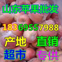 四川内江纸夹膜红富士苹果销售价格图片