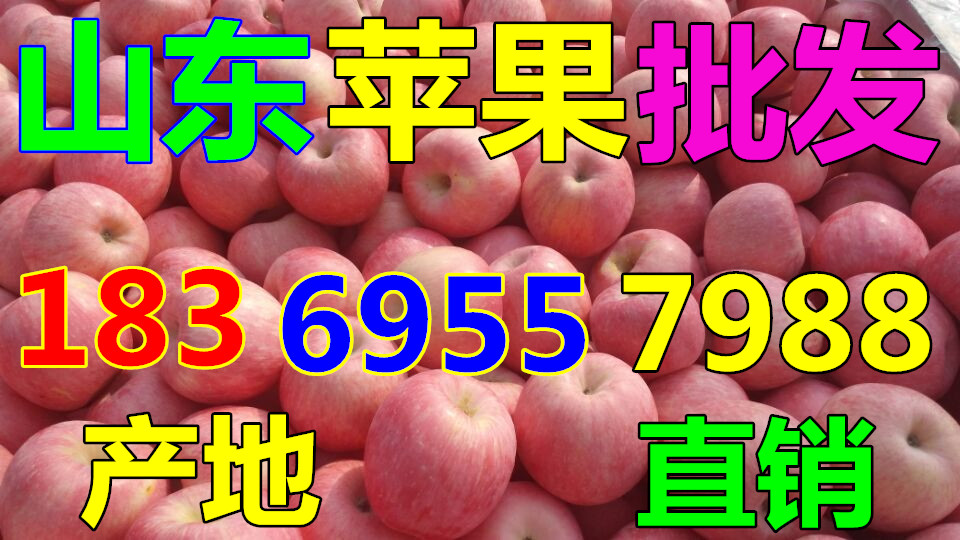青海黄南早熟苹果价钱