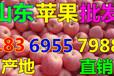 山东日照红富士苹果价格