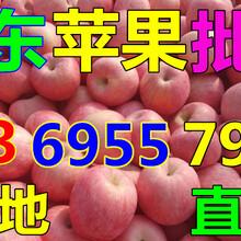 陕西商洛纸袋水晶富士苹果价格预测图片