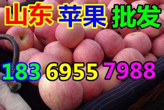 山东省莱芜市水晶红富士苹果销售价格