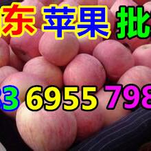 凌源红富士苹果价格行情分析图片