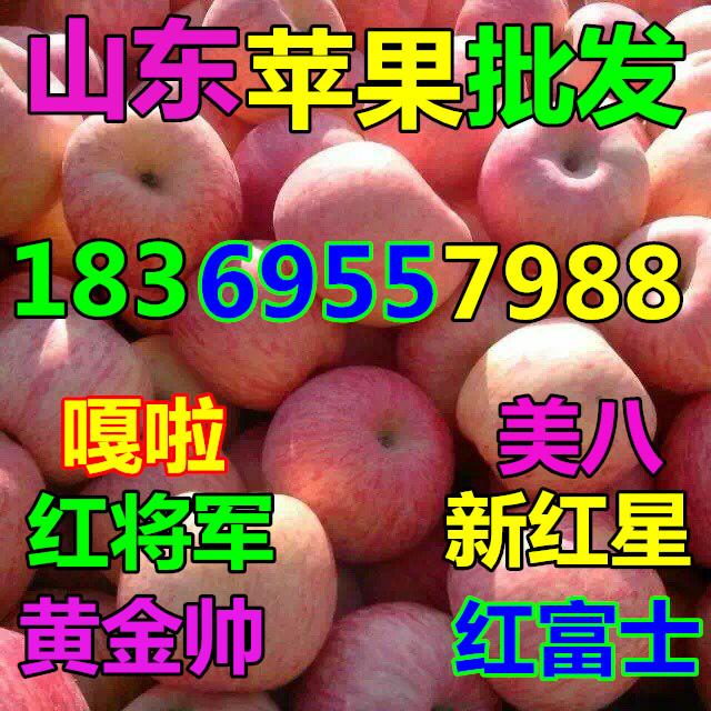 山东青岛纸袋水晶富士苹果哪里便宜